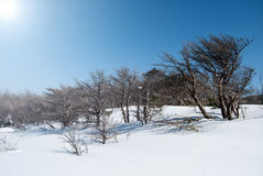 Hallasan mountain at Jeju island Korea in winter Royalty Free Stock Photo