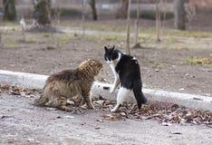Hallazgo hambriento del gato de la calle sin hogar Imagen de archivo libre de regalías