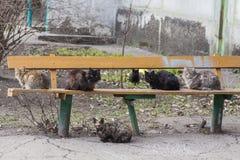 Hallazgo hambriento del gato de la calle sin hogar Foto de archivo