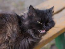Hallazgo hambriento del gato de la calle sin hogar Fotos de archivo libres de regalías