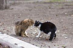 Hallazgo hambriento del gato de la calle sin hogar Fotografía de archivo