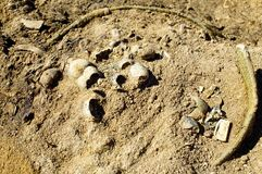 Hallazgos arqueológicos de la cultura del kulai en el sitio de la excavación Foto de archivo libre de regalías