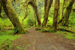 Halle der Moosspur im Regenwald Lizenzfreies Stockfoto