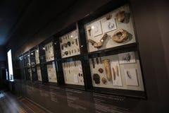 Hallen des Arsenyev-Museums stockbild