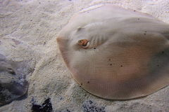 Haller round ray Stock Photos