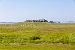 The Hallig Langeness in the wadden Sea Royalty Free Stock Images