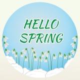 HALLO blüht FRÜHLINGS-Beschriftung auf blauem Hintergrund mit Schneeglöckchen Stock Abbildung