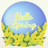 Hallo blüht Frühlingsbeschriftung auf blauem Hintergrund mit Mimose Lizenzfreie Stockbilder