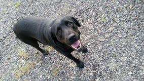 Hallo de hond van Leah Royalty-vrije Stock Foto's