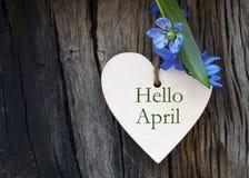 Hallo entspringen April-Grußkarte mit Blau zuerst Blumen auf hölzernem Hintergrund lizenzfreie stockbilder