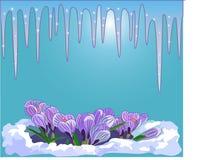 Hallo, Frühling! Zuerst die Eiszapfen und die ersten schönen Blumen Lizenzfreies Stockfoto
