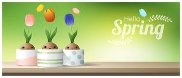Hallo Frühlingshintergrund mit Frühlingsblume Krokus, Tulpe, Schneeglöckchen auf die Holztischoberseite lizenzfreie abbildung