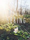 Hallo Frühlingstextzeichen auf schönem blühendem Anemone erstem sprin Lizenzfreie Stockfotos