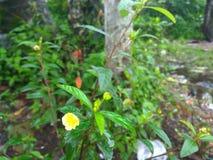 Hallo frische gelbe Blume Lizenzfreie Stockfotos