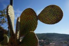 Hallo Kaktus stockbilder