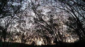 Hallo ochtend rubberlandbouwbedrijf stock foto