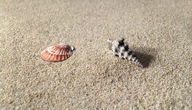 Hallo onderzoeks overzeese shells op zandig strand Stock Fotografie