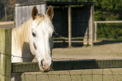Hallo Pferd Stockbild