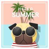 Hallo Sommerhintergrund mit Hundetragender Sonnenbrille Stockfotografie