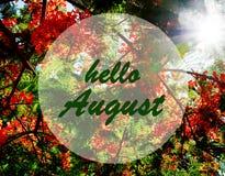Hallo sonnen August-Gruß auf blühendem Flammenbaum und Sonnenuntergang Hintergrund Seashells gestalten auf Sandhintergrund lizenzfreies stockbild