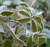 Hallon med rimfrost royaltyfri bild