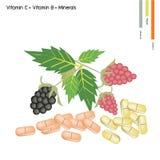 Hallon och björnbär med vitaminet K, B och mineraler Royaltyfri Foto