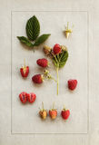 Hallon på tappningpapper Botanisk illustration Royaltyfri Foto