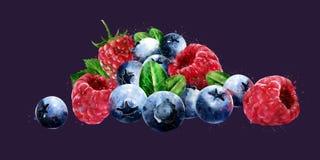 Hallon, tranbär och blåbär på mörk bakgrund stock illustrationer