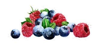 Hallon, tranbär och blåbär på vit bakgrund royaltyfri illustrationer