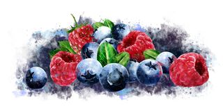 Hallon, tranbär och blåbär på vit bakgrund vektor illustrationer