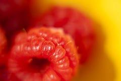 Hallonfrukt Royaltyfri Foto