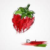 Hallonfrukt Royaltyfria Bilder