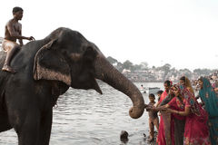 Hallow River. Ujjain, India - April 9, 2013: Elephant collecting coins from tribal womans of india at Ramghat sipra river in Ujjain City, sipra river also knows Stock Image