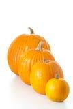 halloween изолировал тыквы Стоковая Фотография