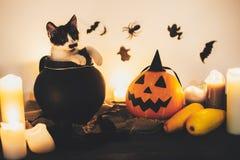 halloween счастливый черная киска сидя в котле и Джеке ведьмы стоковая фотография rf