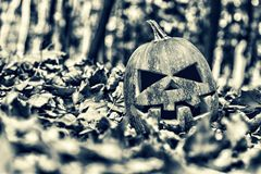 halloween halloween Royaltyfri Foto