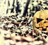 halloween halloween Arkivbilder