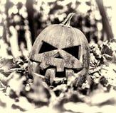 halloween halloween Arkivbild