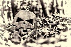 halloween halloween Arkivfoton