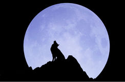 HALLOWEEN. Under the moonlight, the wolf howling at the mountain Royalty Free Stock Images