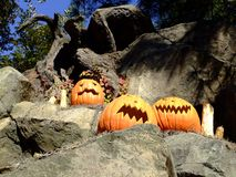 Halloween. Pumpkin in the forest Royalty Free Stock Photography