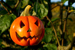 Halloween. Pumpkin head hanging from a tree Royalty Free Stock Photography