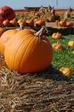 Halloween. A pumpkin for Halloween at a farm Stock Photo