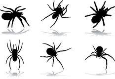 Halloween 77 pająków Zdjęcie Royalty Free