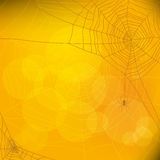 Halloween autumn background with spider web,  Royalty Free Stock Photography
