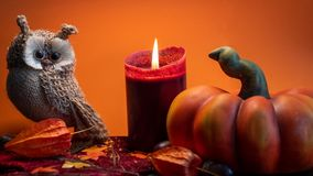 Halloween autumn decoration with pumpkin, cute owl and red candle on leaves orange background. Studio light stock photo