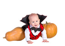Halloween baby boy in dracula cloak with pumpking. Little baby boy  in black halloween cloak playing with pumpkins and smiling, isolated on a white background Royalty Free Stock Photo