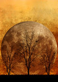Halloween background. Tree and Full Moon Stock Image