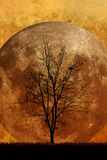 Halloween background. And dead trees Royalty Free Stock Photography
