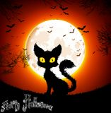 Halloween background a cat Royalty Free Stock Photo